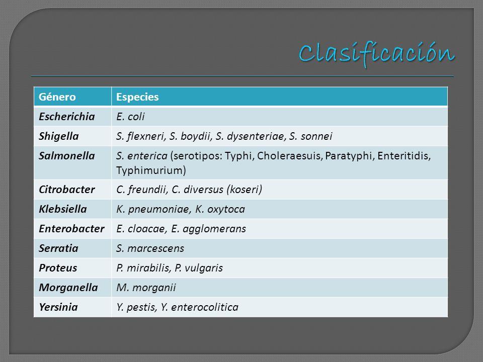 Clasificación Género Especies Escherichia E. coli Shigella