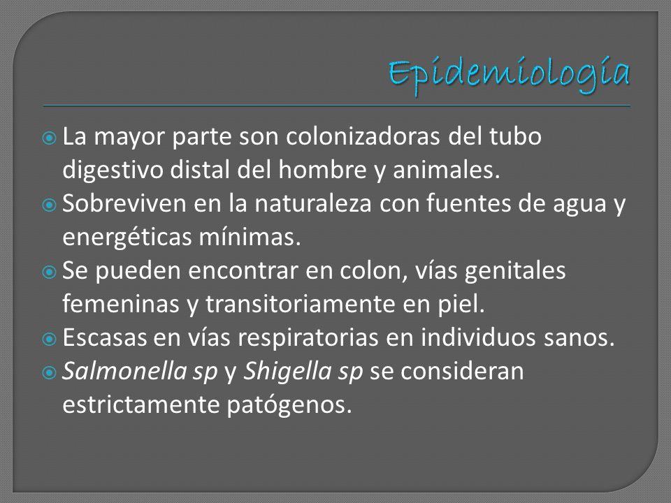 Epidemiología La mayor parte son colonizadoras del tubo digestivo distal del hombre y animales.