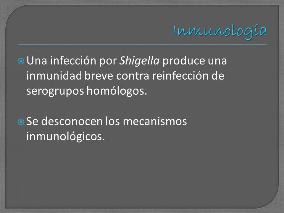 Inmunología Una infección por Shigella produce una inmunidad breve contra reinfección de serogrupos homólogos.