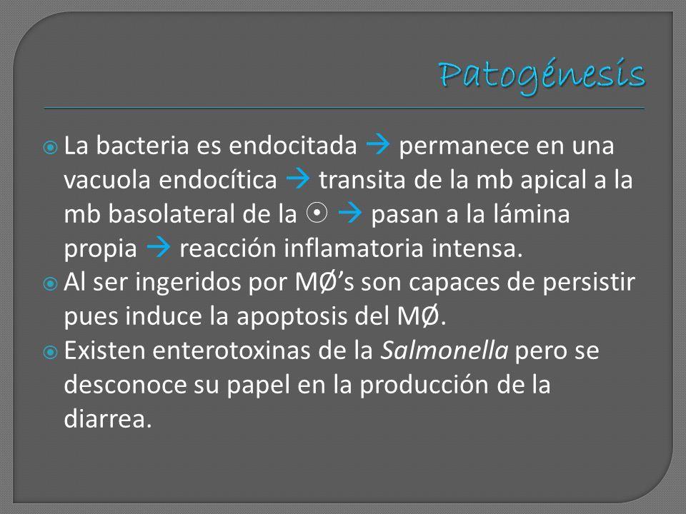 Patogénesis
