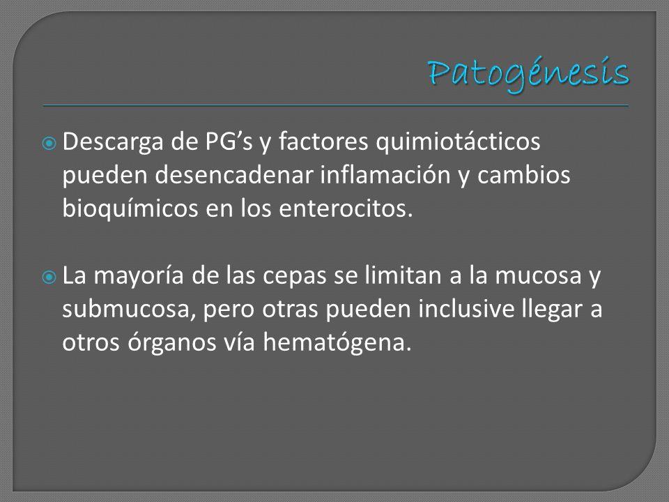 Patogénesis Descarga de PG's y factores quimiotácticos pueden desencadenar inflamación y cambios bioquímicos en los enterocitos.