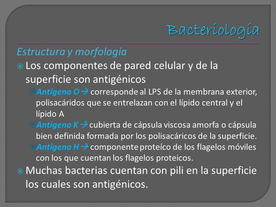 Bacteriología Estructura y morfología