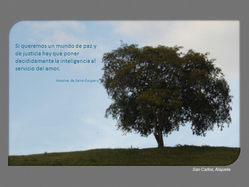 Si queremos un mundo de paz y de justicia hay que poner decididamente la inteligencia al servicio del amor.