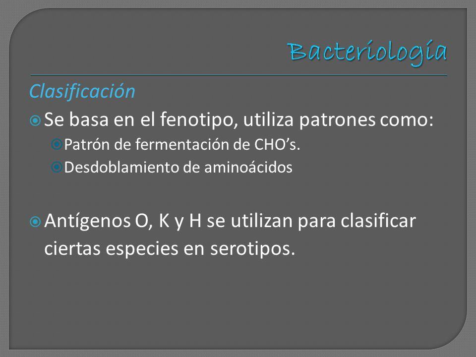Bacteriología Clasificación
