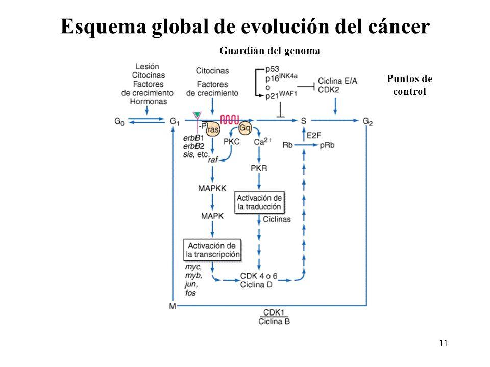 Esquema global de evolución del cáncer