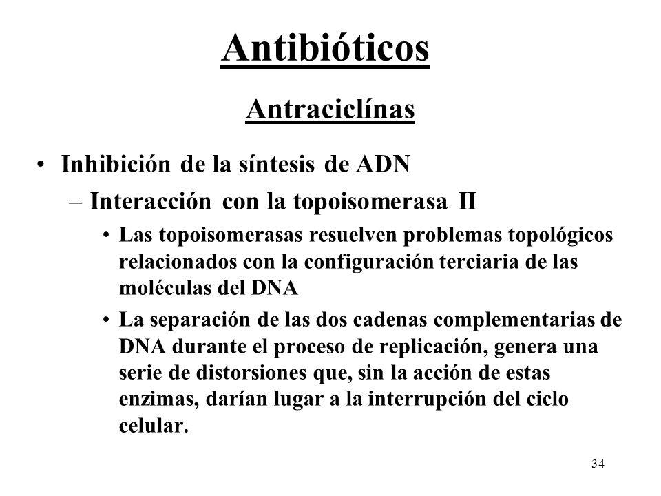 Antibióticos Antraciclínas Inhibición de la síntesis de ADN