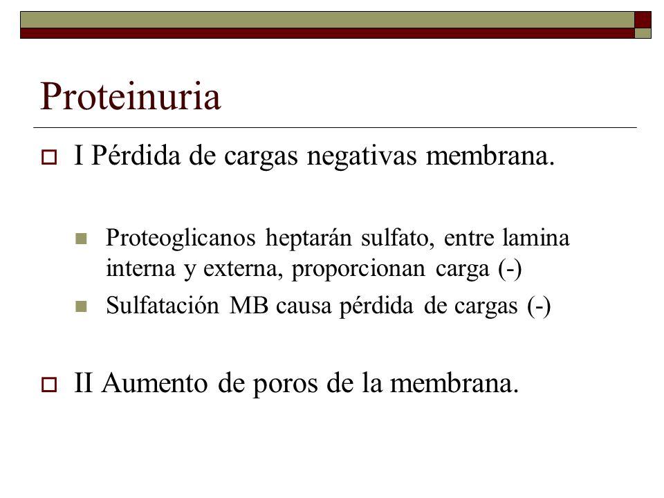 Proteinuria I Pérdida de cargas negativas membrana.