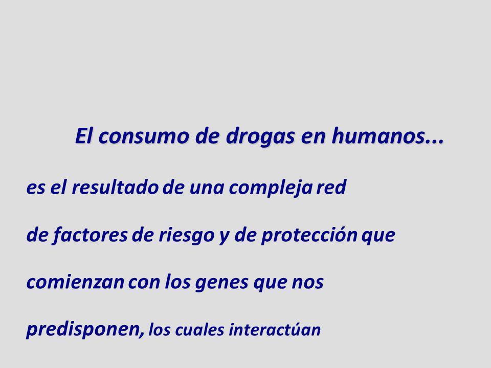 El consumo de drogas en humanos...