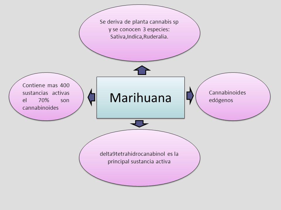 delta9tetrahidrocanabinol es la principal sustancia activa
