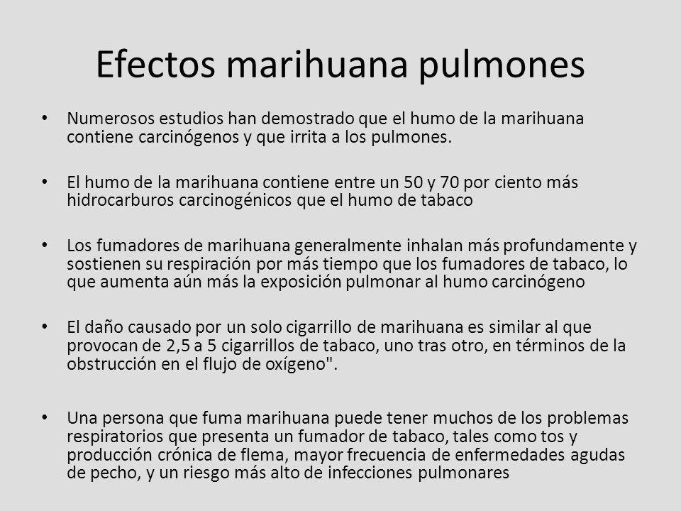 Efectos marihuana pulmones