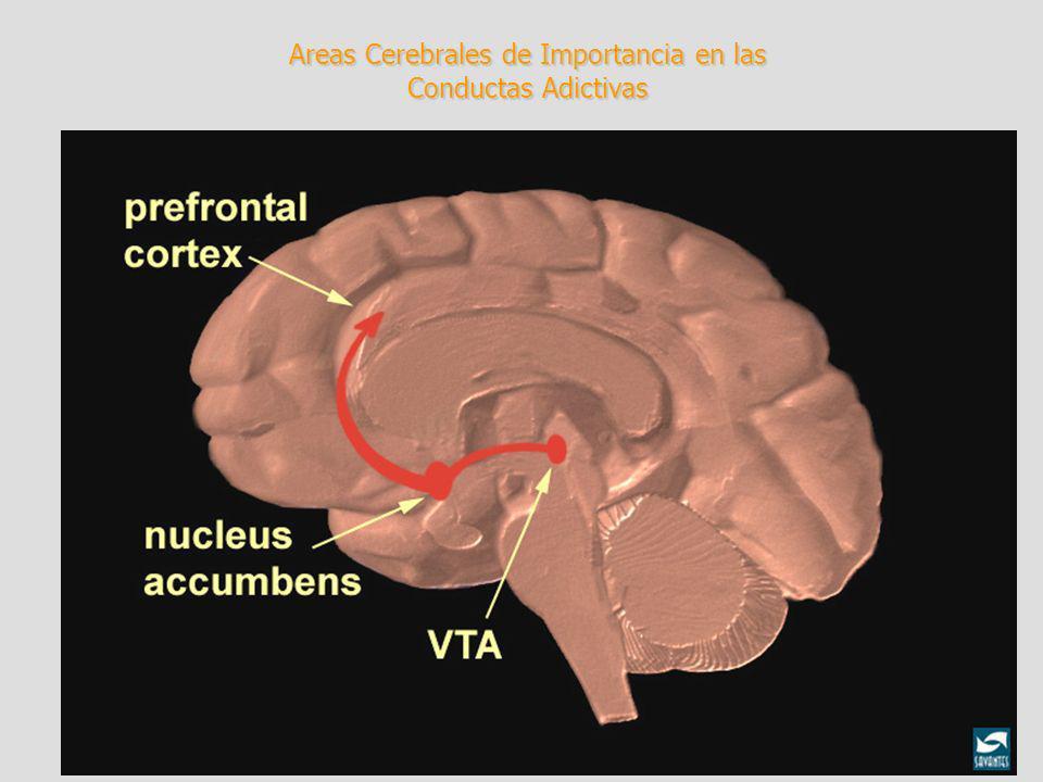 Areas Cerebrales de Importancia en las Conductas Adictivas