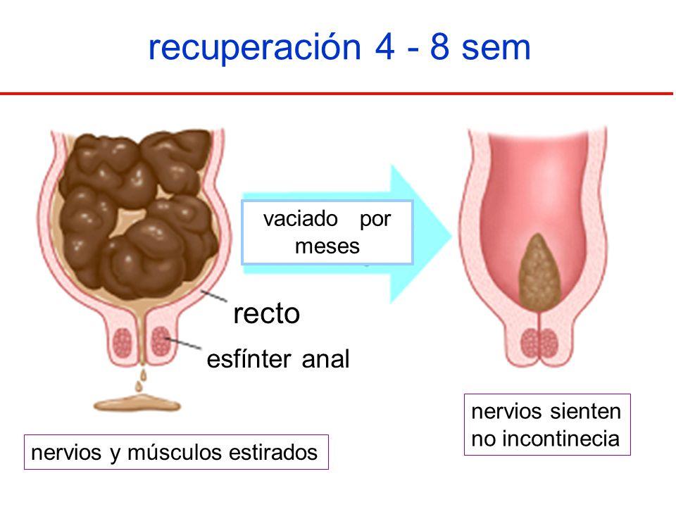 recuperación 4 - 8 sem recto esfínter anal vaciado por meses