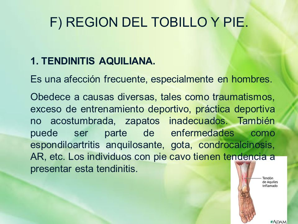 F) REGION DEL TOBILLO Y PIE.