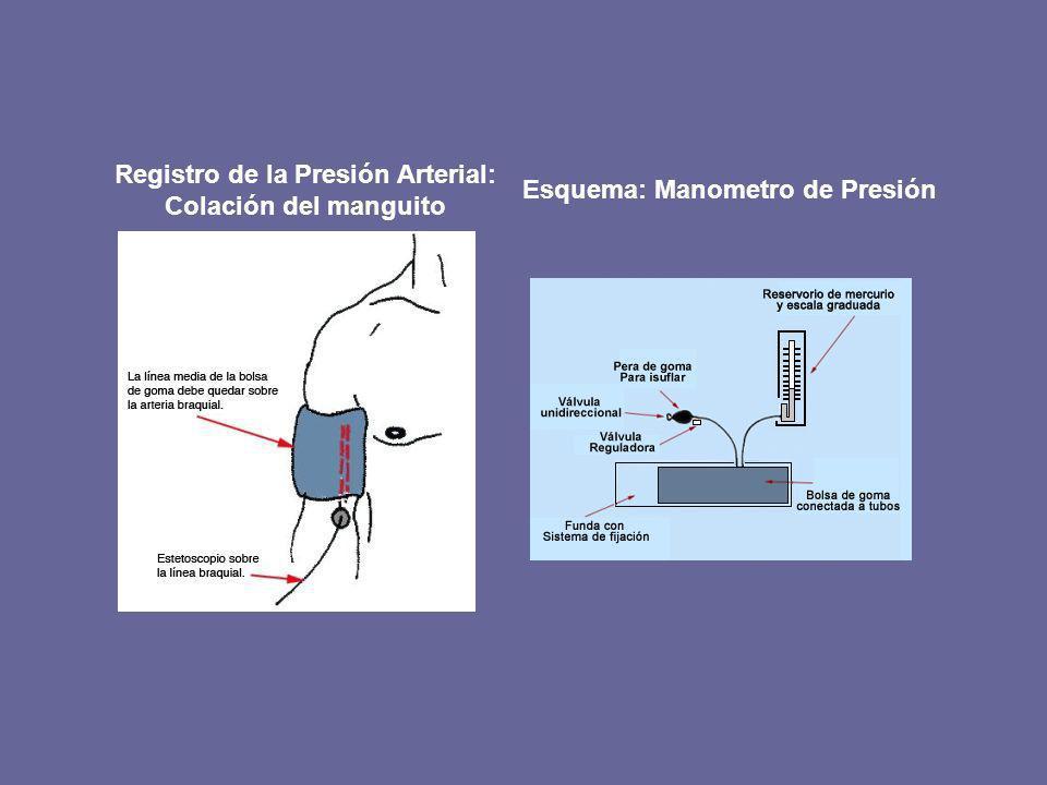 Registro de la Presión Arterial: Colación del manguito