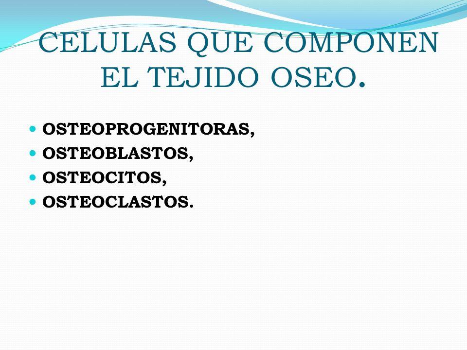 CELULAS QUE COMPONEN EL TEJIDO OSEO.