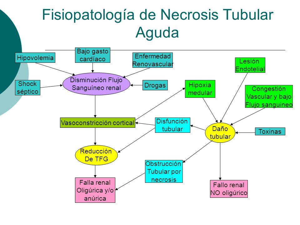 Fisiopatología de Necrosis Tubular Aguda