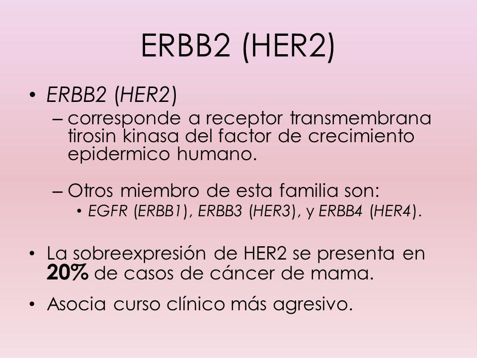ERBB2 (HER2) ERBB2 (HER2) corresponde a receptor transmembrana tirosin kinasa del factor de crecimiento epidermico humano.