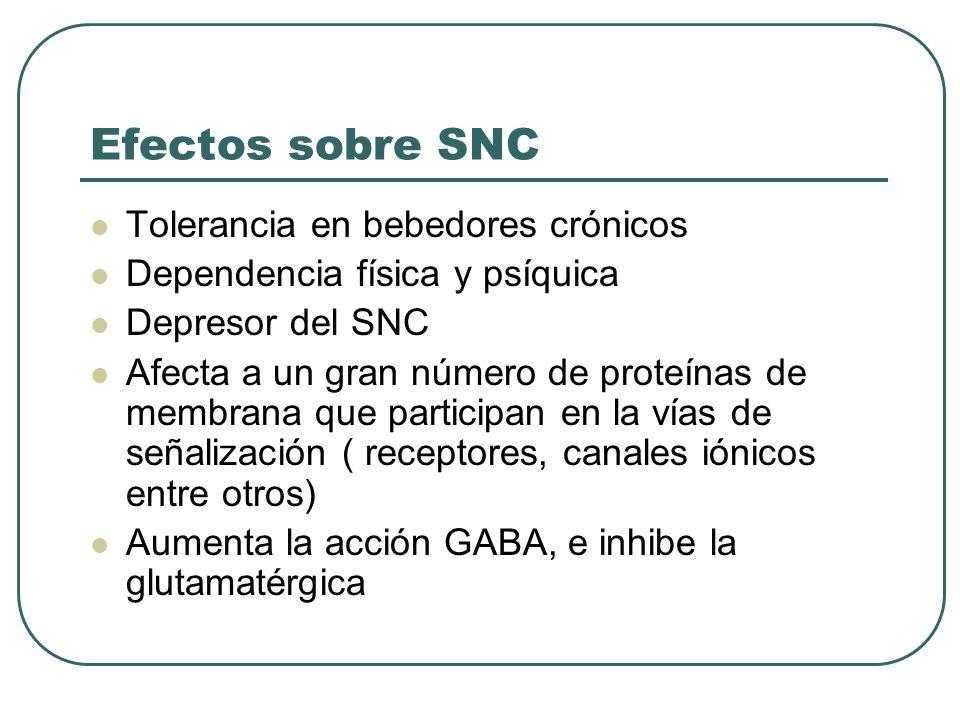 Efectos sobre SNC Tolerancia en bebedores crónicos