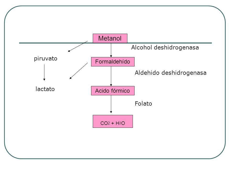 CO2 + H2O Metanol Alcohol deshidrogenasa piruvato Formaldehído