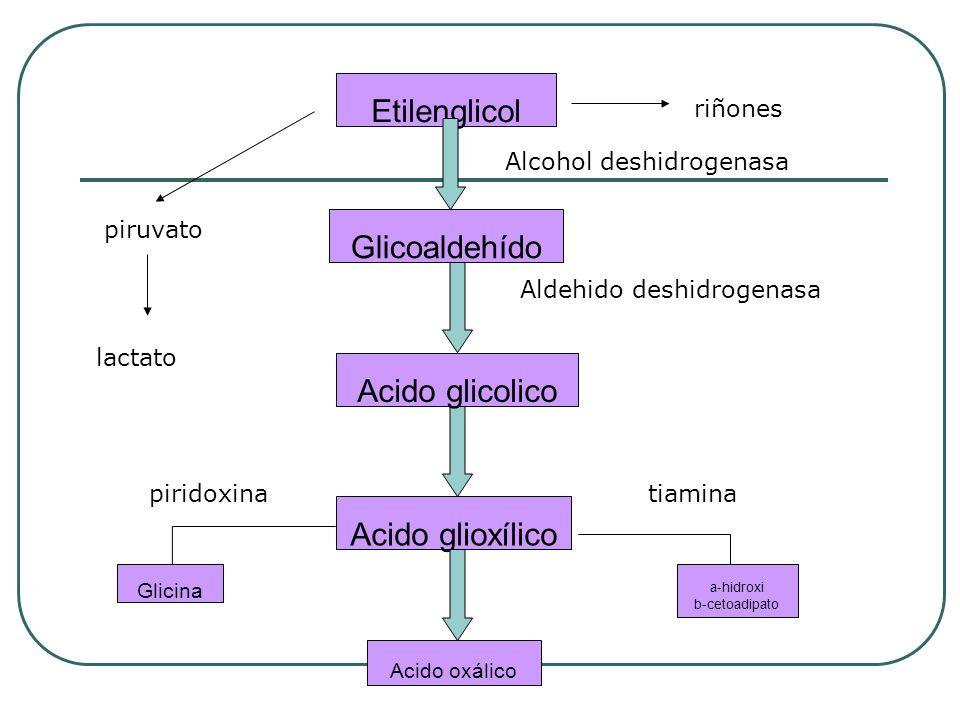 Etilenglicol Glicoaldehído Acido glicolico Acido glioxílico Glicina