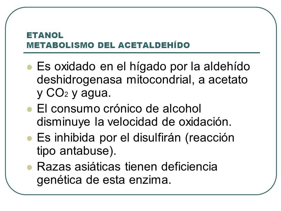 ETANOL METABOLISMO DEL ACETALDEHÍDO