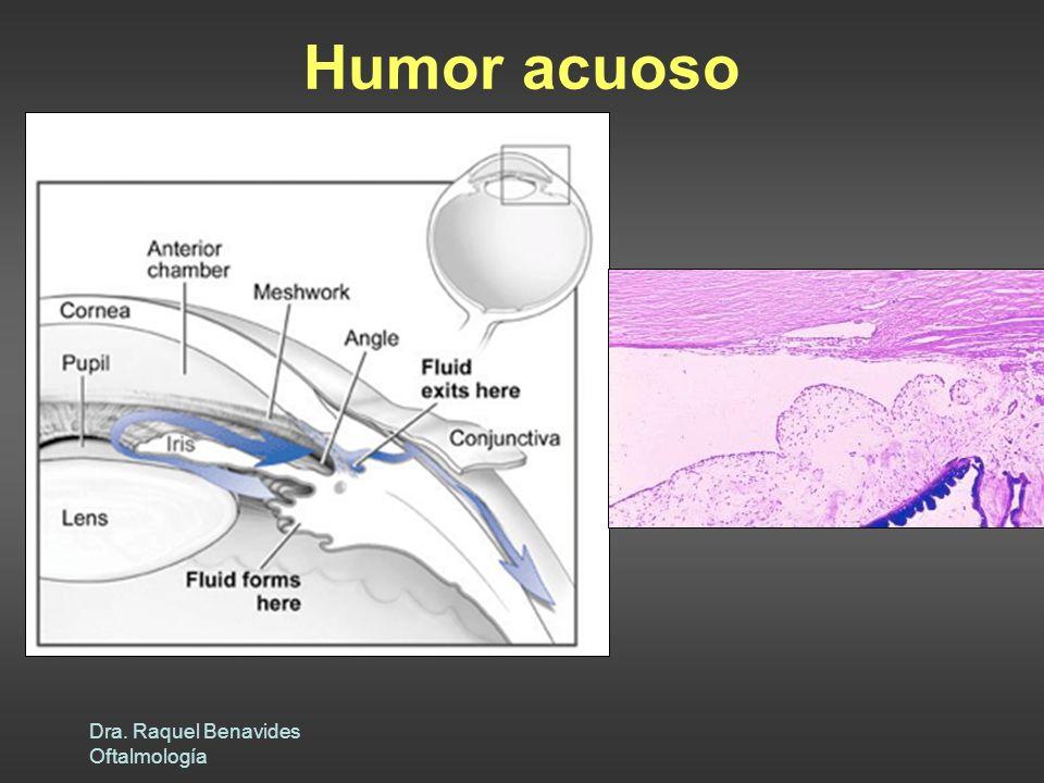 Humor acuoso Dra. Raquel Benavides Oftalmología