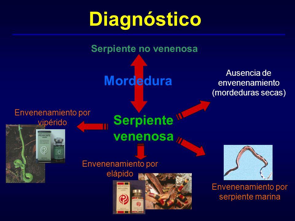 Diagnóstico Mordedura Serpiente venenosa Serpiente no venenosa