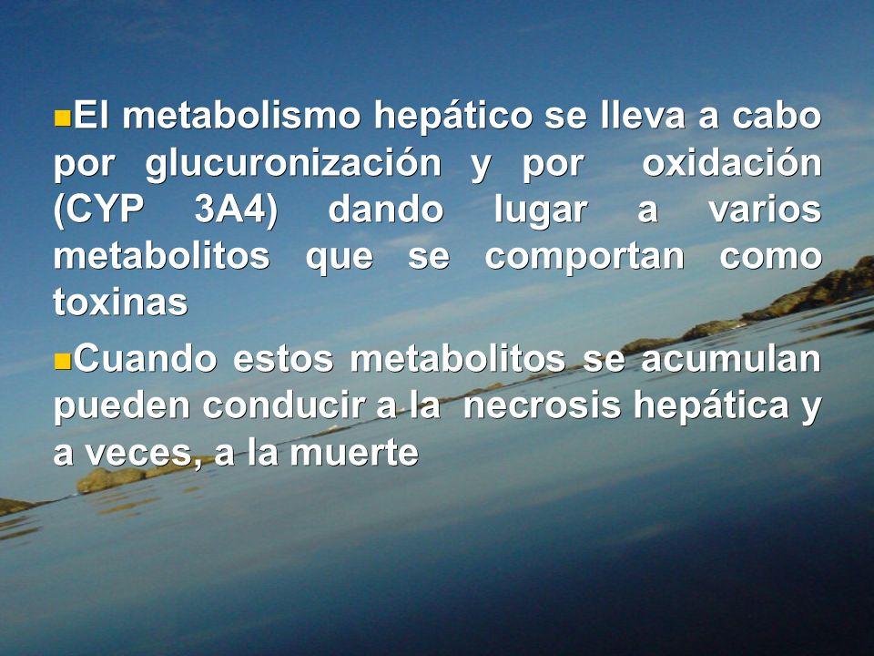 El metabolismo hepático se lleva a cabo por glucuronización y por oxidación (CYP 3A4) dando lugar a varios metabolitos que se comportan como toxinas