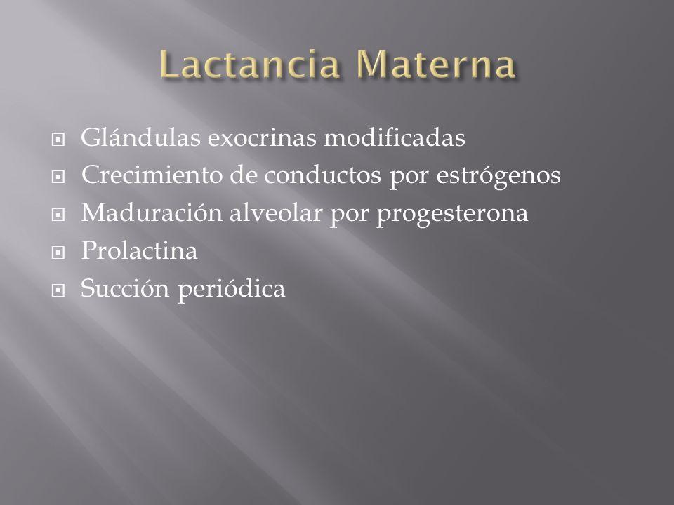 Lactancia Materna Glándulas exocrinas modificadas