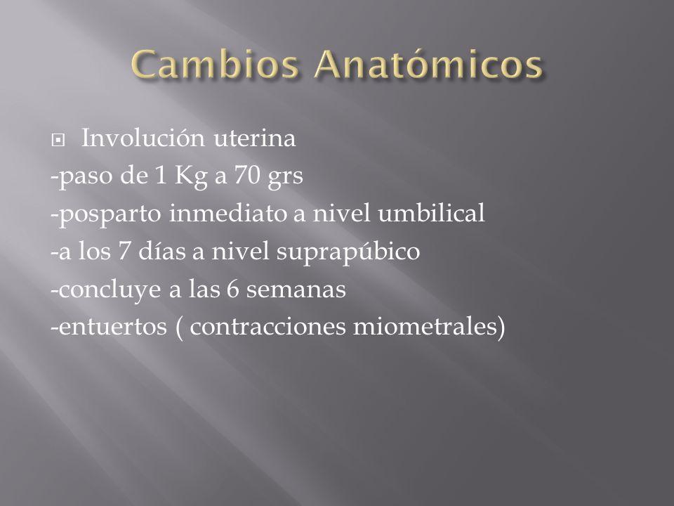 Cambios Anatómicos Involución uterina -paso de 1 Kg a 70 grs