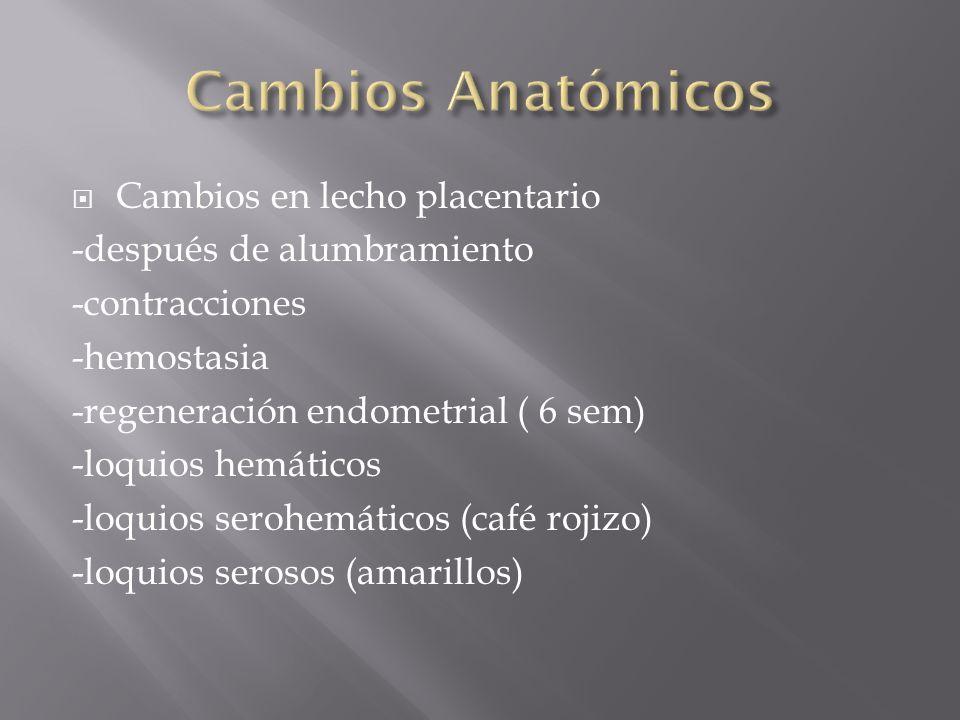 Cambios Anatómicos Cambios en lecho placentario