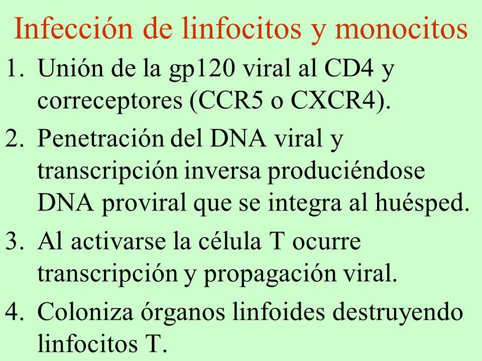 Infección de linfocitos y monocitos