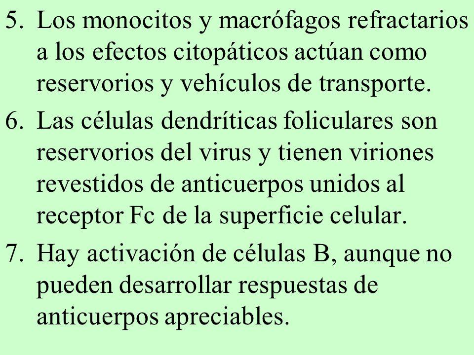 Los monocitos y macrófagos refractarios a los efectos citopáticos actúan como reservorios y vehículos de transporte.