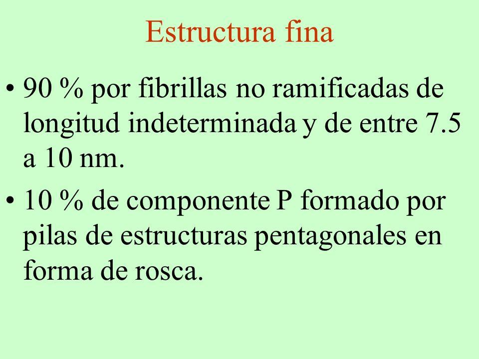 Estructura fina 90 % por fibrillas no ramificadas de longitud indeterminada y de entre 7.5 a 10 nm.