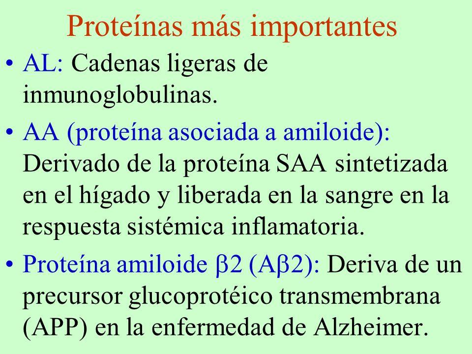 Proteínas más importantes