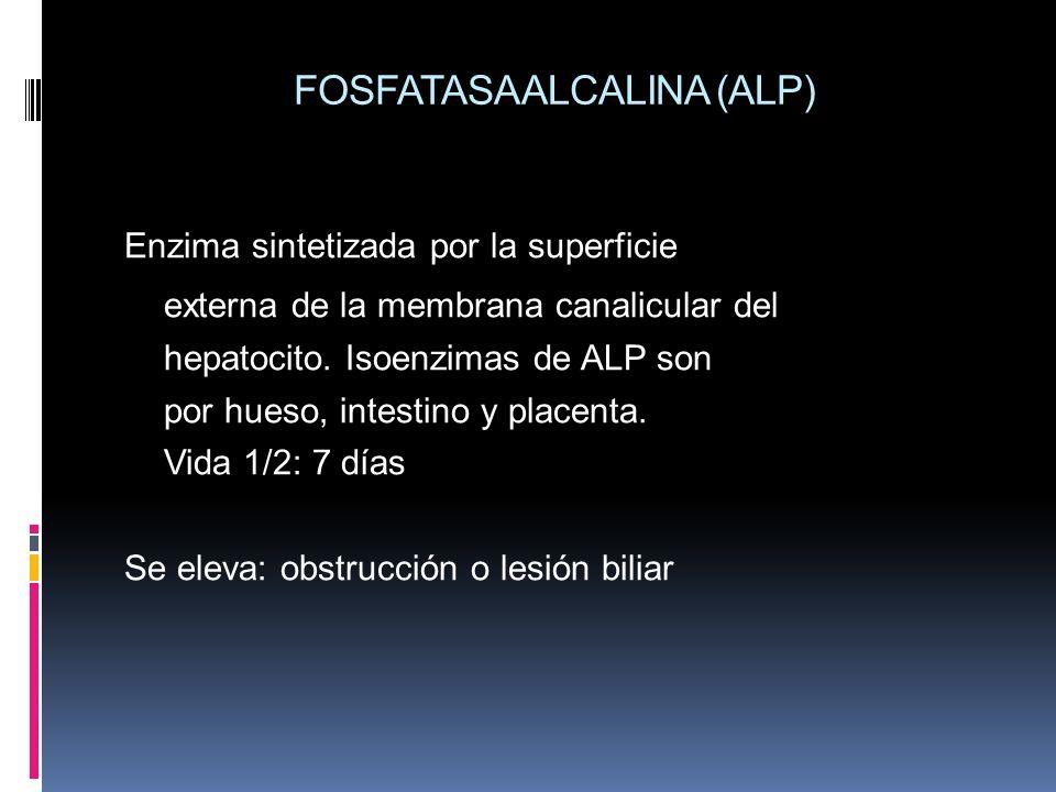 FOSFATASA ALCALINA (ALP)