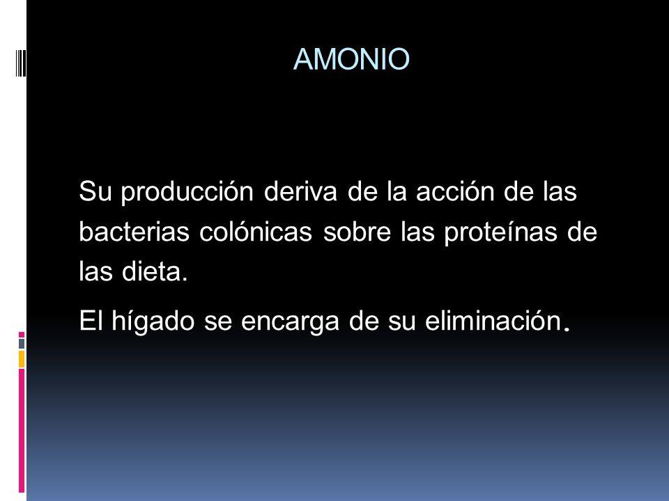 AMONIO Su producción deriva de la acción de las bacterias colónicas sobre las proteínas de las dieta.