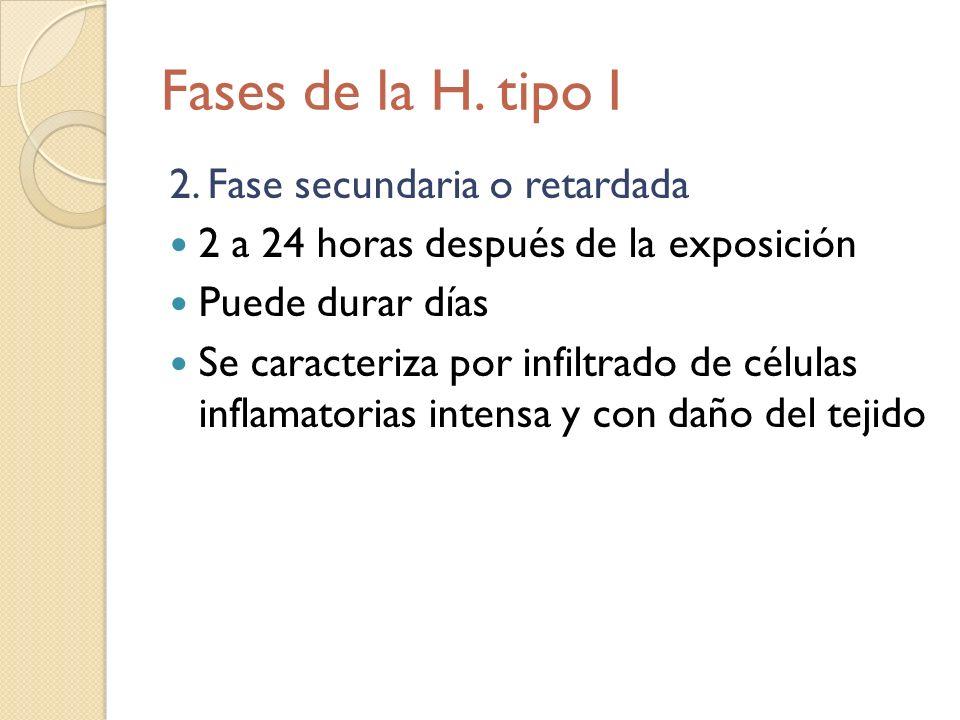 Fases de la H. tipo I 2. Fase secundaria o retardada