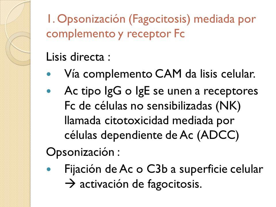 1. Opsonización (Fagocitosis) mediada por complemento y receptor Fc