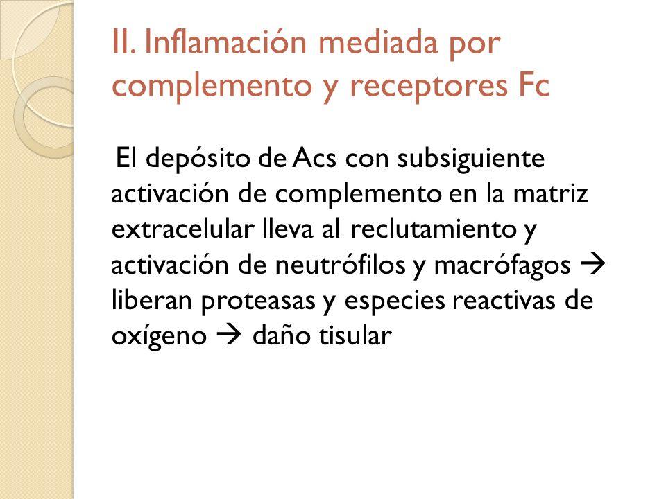 II. Inflamación mediada por complemento y receptores Fc