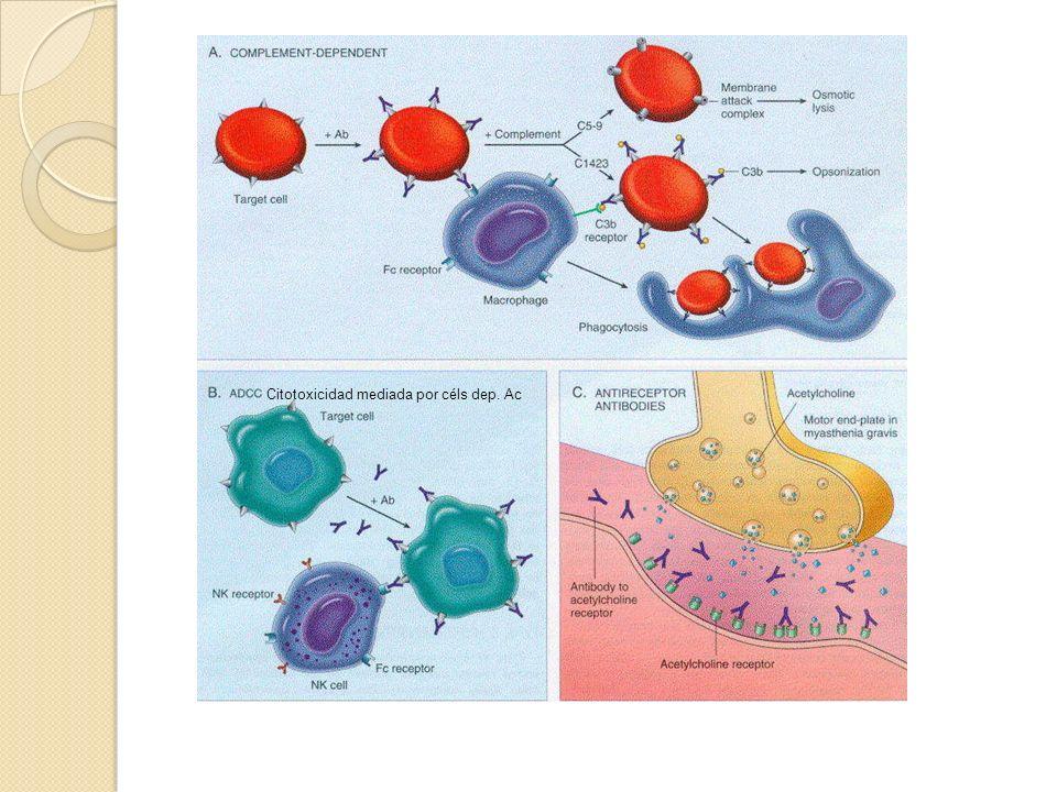 Citotoxicidad mediada por céls dep. Ac