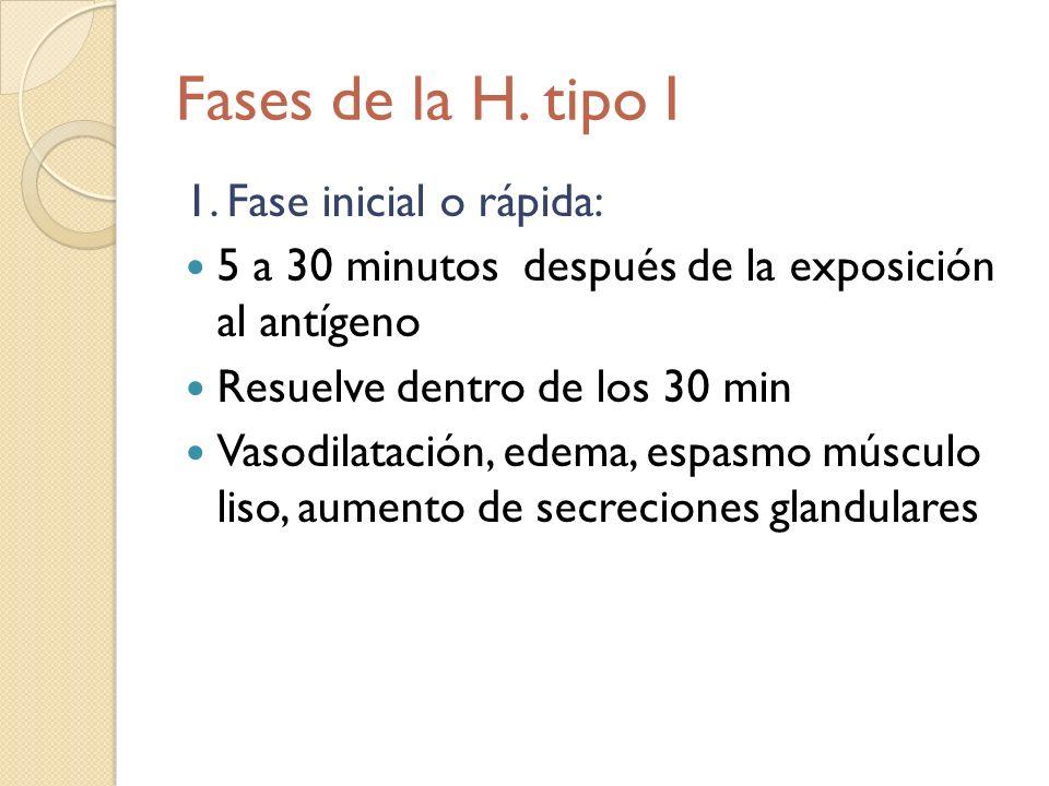 Fases de la H. tipo I 1. Fase inicial o rápida:
