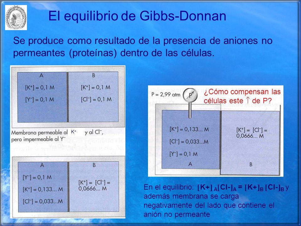 El equilibrio de Gibbs-Donnan