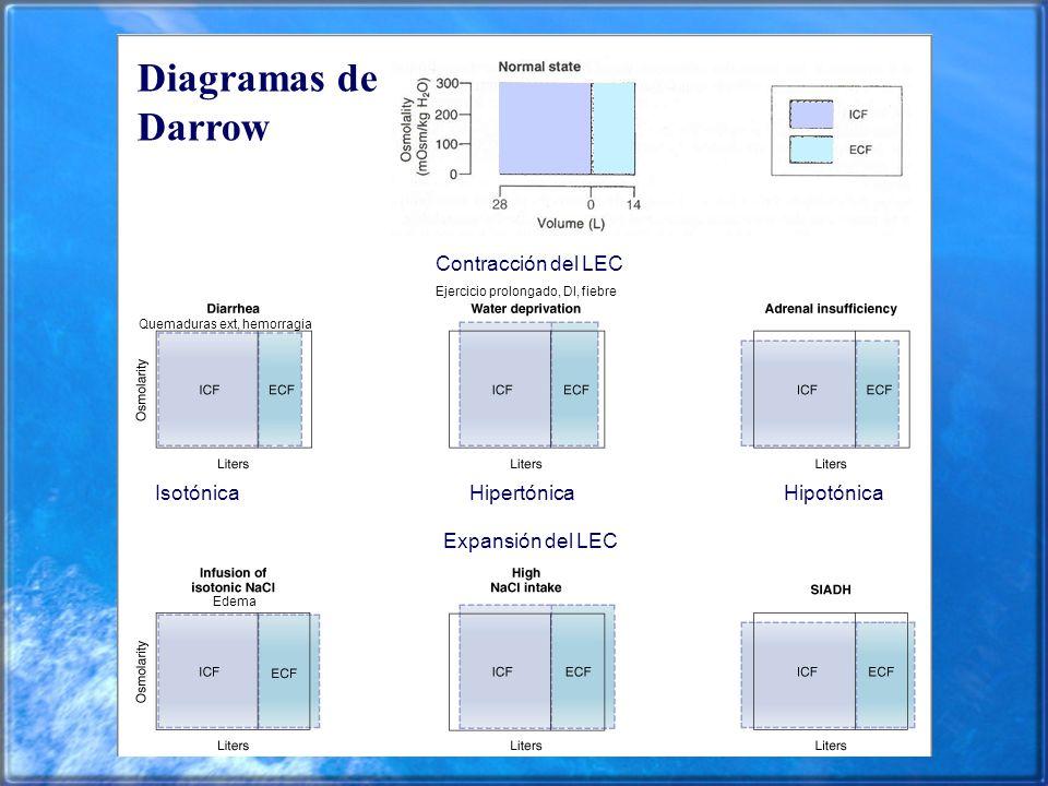 Diagramas de Darrow Contracción del LEC