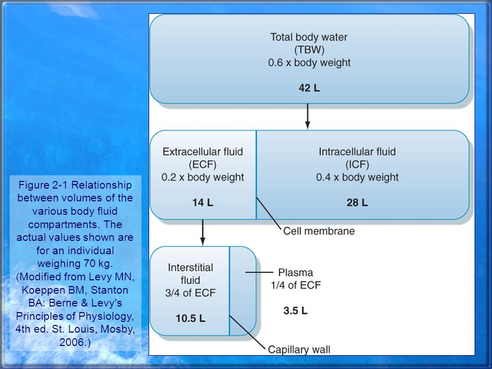 Figure 2-1 Relationship between volumes of the various body fluid compartments.