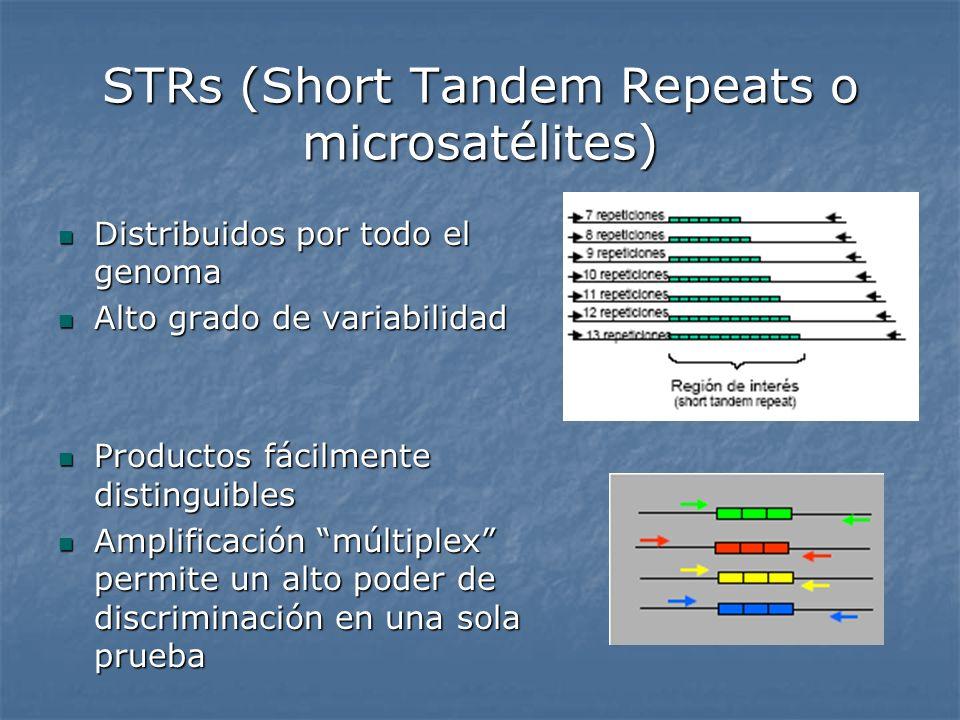 STRs (Short Tandem Repeats o microsatélites)