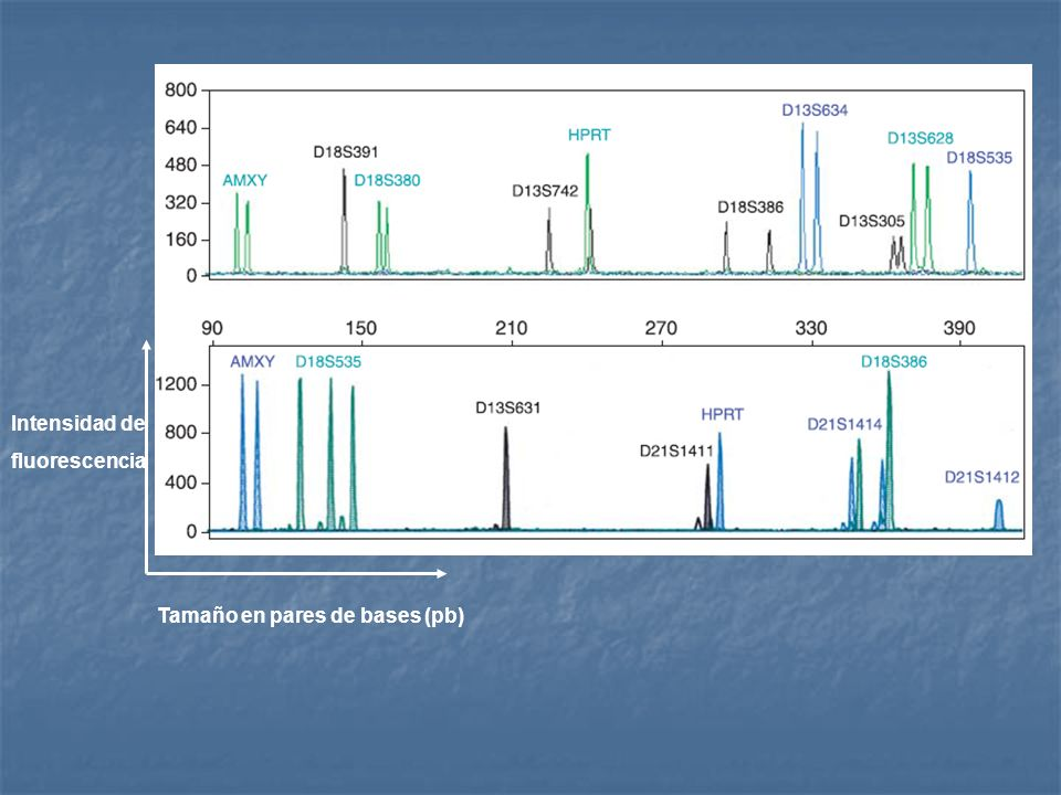Intensidad de fluorescencia Tamaño en pares de bases (pb)