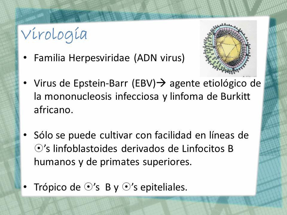 Virología Familia Herpesviridae (ADN virus)