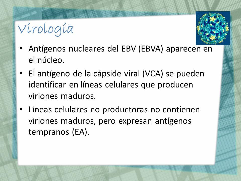 Virología Antígenos nucleares del EBV (EBVA) aparecen en el núcleo.