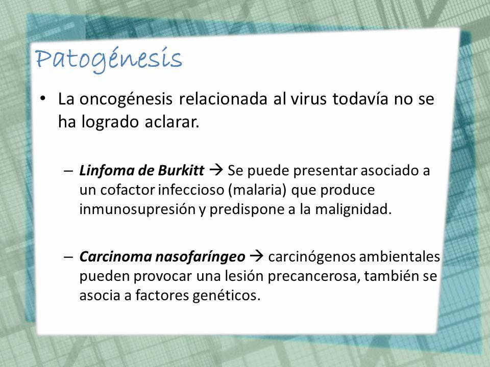 PatogénesisLa oncogénesis relacionada al virus todavía no se ha logrado aclarar.
